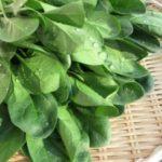 不妊治療に効果的な栄養素「葉酸」を含む食材